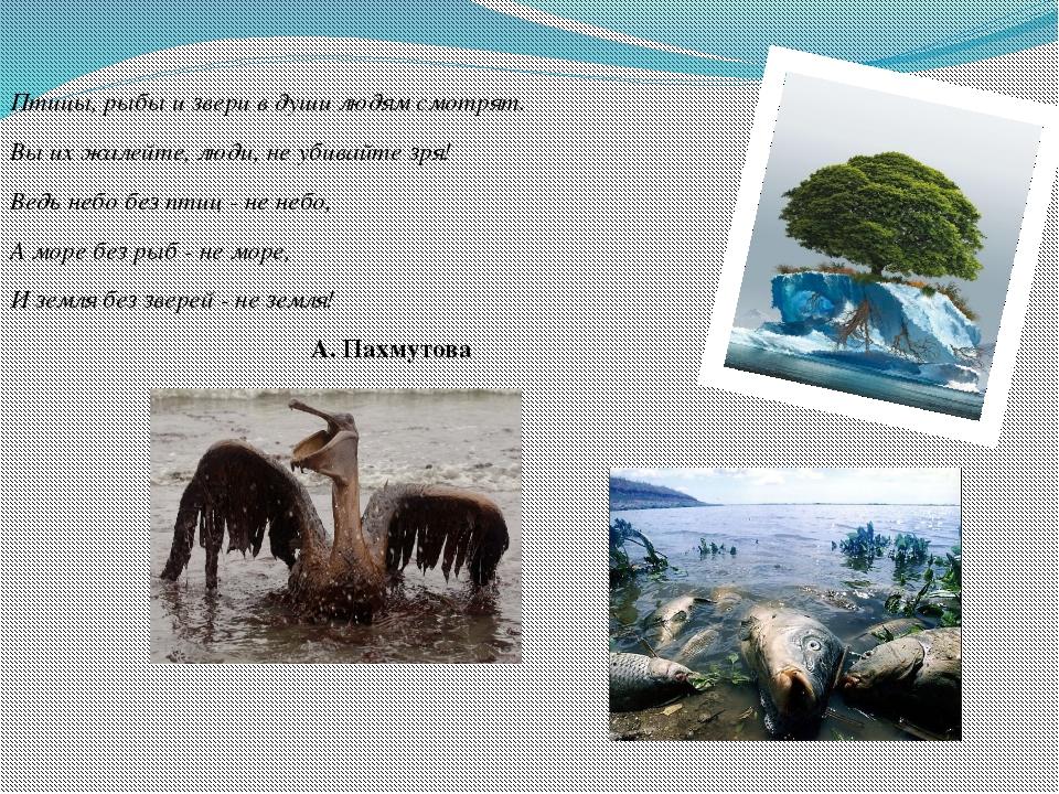 Птицы, рыбы и звери в души людям смотрят. Вы их жалейте, люди, не убивайте зр...