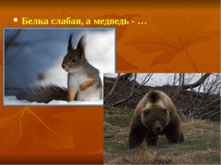 Белка слабая, а медведь - …