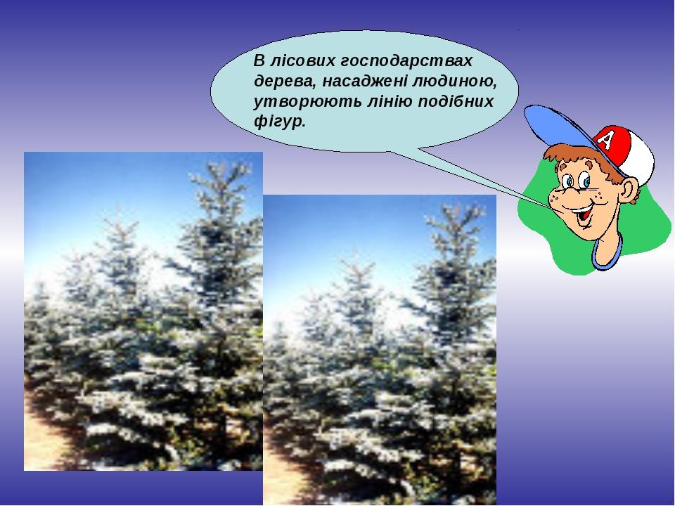 В лісових господарствах дерева, насаджені людиною, утворюють лінію подібних ф...