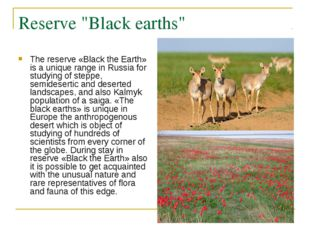 """Reserve """"Black earths"""" The reserve «Black the Earth» is a unique range in Rus"""
