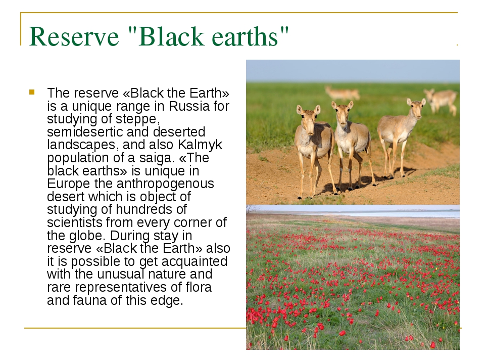 """Reserve """"Black earths"""" The reserve «Black the Earth» is a unique range in Rus..."""