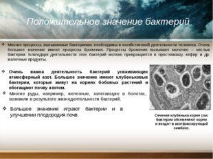 Положительное значение бактерий Многие процессы, вызываемые бактериями, необ