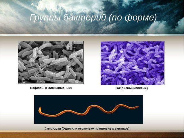 Группы бактерий (по форме) Бациллы (Палочковидные) Вибрионы (Извитые) Спирилл...