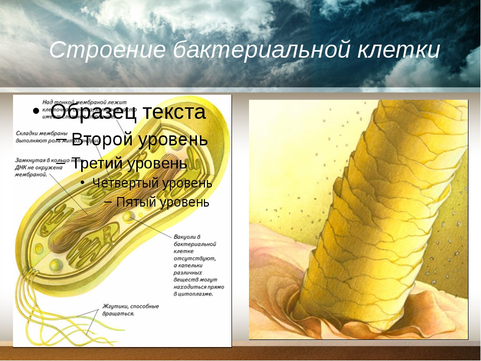 Строение бактериальной клетки