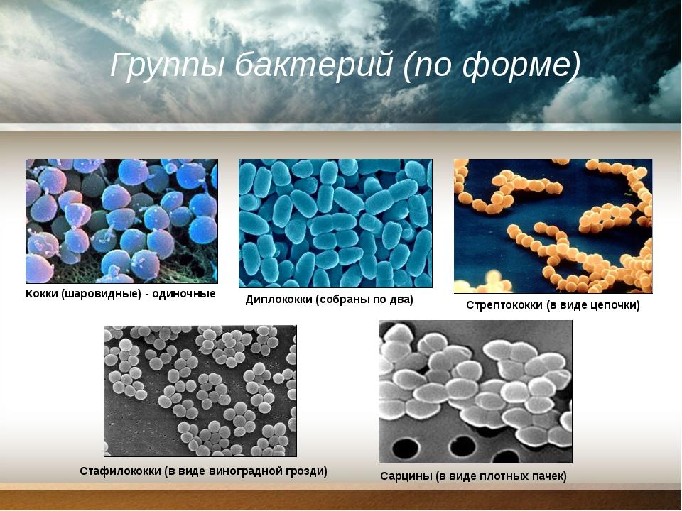 Группы бактерий (по форме) Кокки (шаровидные) - одиночные Диплококки (собраны...