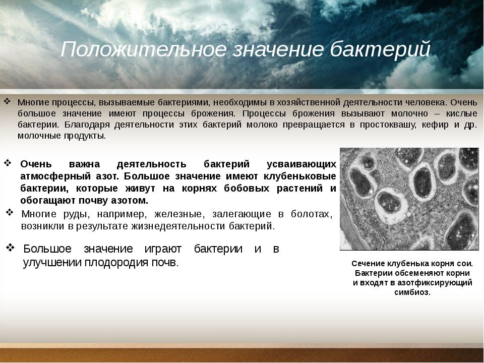 Положительное значение бактерий Многие процессы, вызываемые бактериями, необ...