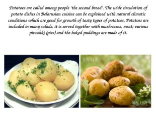 """Potatoes are called among people """"the second bread"""". The wide circulation of"""