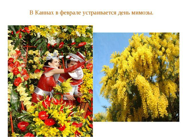 В Каннах в феврале устраивается день мимозы.