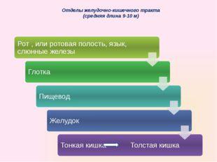 Отделы желудочно-кишечного тракта (средняя длина 9-10 м)