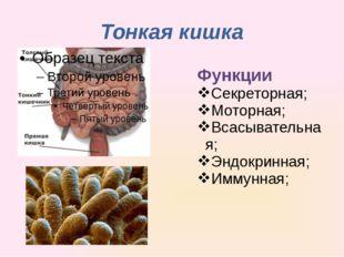 Тонкая кишка Функции Секреторная; Моторная; Всасывательная; Эндокринная; Имму