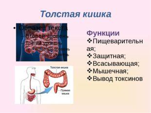 Толстая кишка Функции Пищеварительная; Защитная; Всасывающая; Мышечная; Вывод