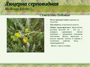 Люцерна серповидная Medicago falcata L. Семейство Бобовые Место произрастания