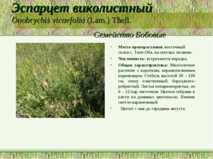 Эспарцет виколистный Onobrychis vicaefolia (Lam.) Thell. Семейство Бобовые Ме
