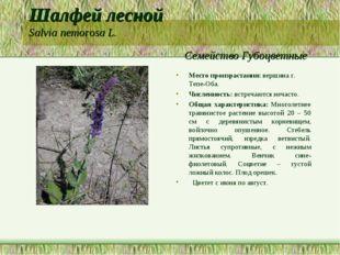 Шалфей лесной Salvia nemorosa L. Семейство Губоцветные Место произрастания: в