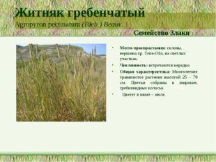 Житняк гребенчатый Agropyron pectinatum (Bieb.) Beauv. Семейство Злаки Место