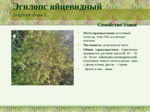 Эгилопс яйцевидный Aegilops ovata L. Семейство Злаки Место произрастания: вос