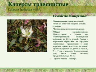 Каперсы травянистые Capparis herbacea Willd. Семейство Каперсовые Место произ