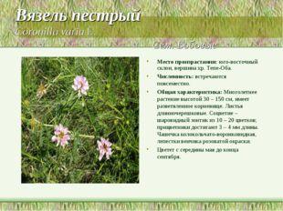 Вязель пестрый Coronilla varia L. Сем. Бобовые Место произрастания: юго-восто