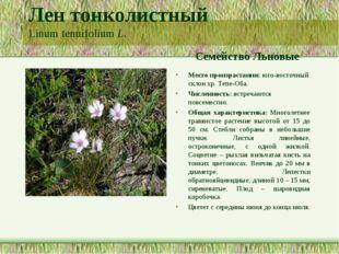 Лен тонколистный Linum tenuifolium L. Семейство Льновые Место произрастания:
