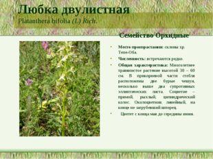 Любка двулистная Platanthera bifolia (L) Rich. Семейство Орхидные Место произ