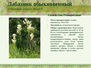 Лабазник обыкновенный Filipendula vulgaris Moench Семейство Розоцветные Место