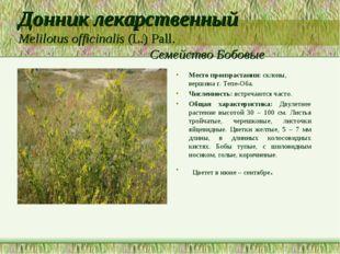Донник лекарственный Melilotus officinalis (L.) Pall. Семейство Бобовые Место