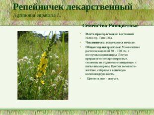 Репейничек лекарственный Agrimonia eupatoria L. Семейство Розоцветные Место п