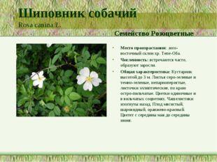 Шиповник собачий Rosa canina L. Семейство Розоцветные Место произрастания: .ю