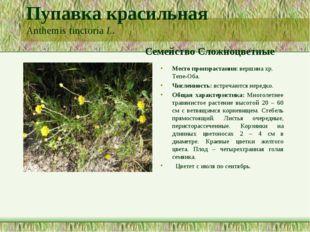 Пупавка красильная Anthemis tinctoria L. Семейство Сложноцветные Место произр