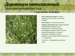 Дорикниум пятилистный Dorycnium pentaphyllum Scop. Семейство Бобовые Место пр
