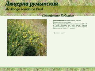 Люцерна румынская Medicago romanica Prod. Семейство Бобовые Место произрастан