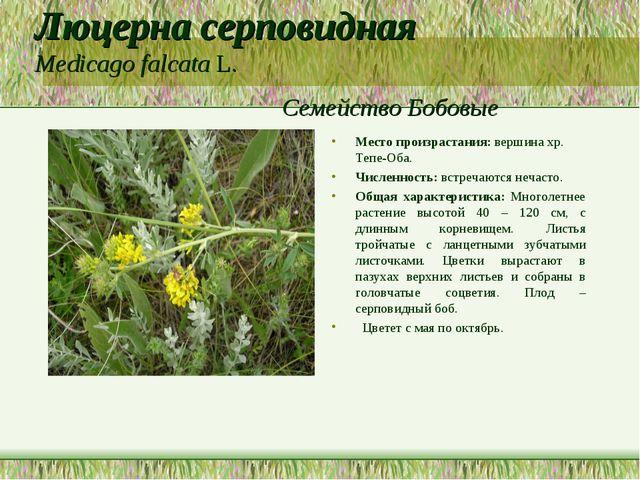 Люцерна серповидная Medicago falcata L. Семейство Бобовые Место произрастания...