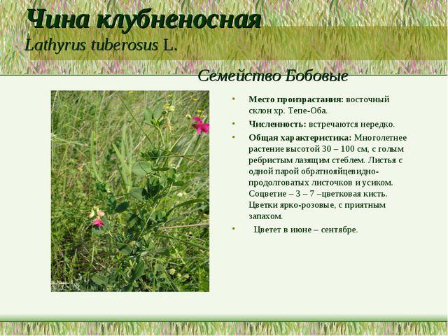 Чина клубненосная Lathyrus tuberosus L. Семейство Бобовые Место произрастания...