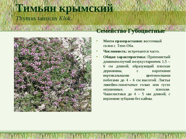 Тимьян крымский Thymus tauricus Klok. Семейство Губоцветные Место произрастан...