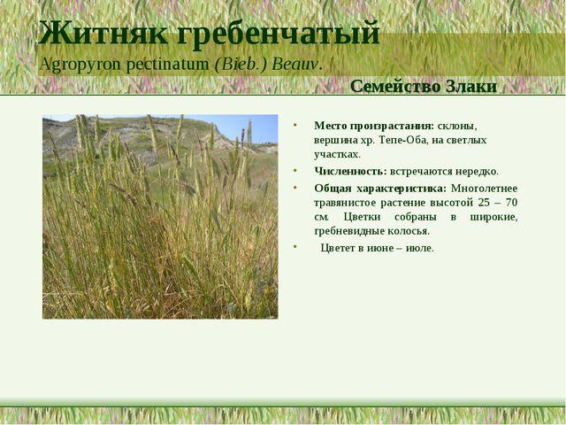 Житняк гребенчатый Agropyron pectinatum (Bieb.) Beauv. Семейство Злаки Место...