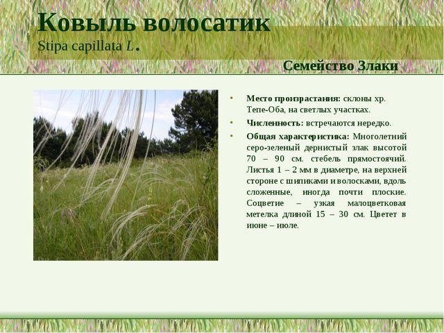 Ковыль волосатик Stipa capillata L. Семейство Злаки Место произрастания: скло...