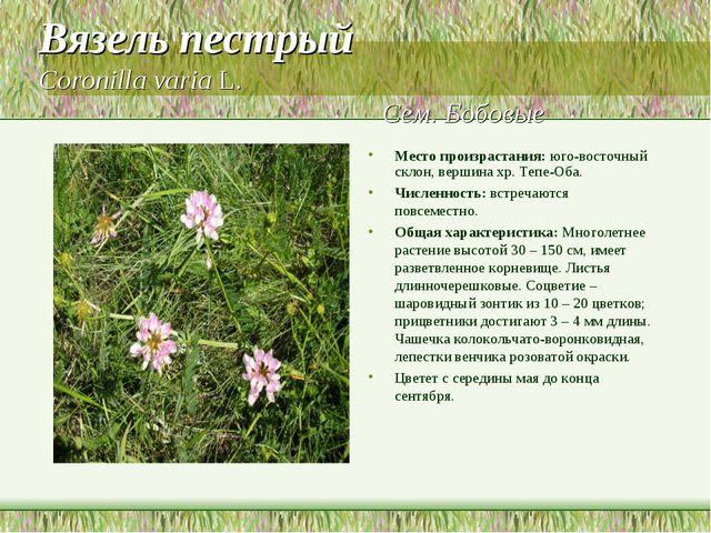 Вязель пестрый Coronilla varia L. Сем. Бобовые Место произрастания: юго-восто...