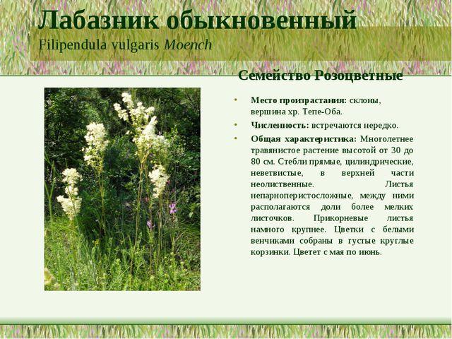 Лабазник обыкновенный Filipendula vulgaris Moench Семейство Розоцветные Место...