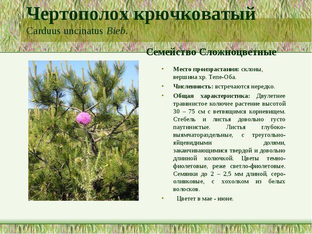 Чертополох крючковатый Carduus uncinatus Bieb. Семейство Сложноцветные Место...