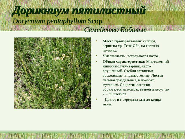 Дорикниум пятилистный Dorycnium pentaphyllum Scop. Семейство Бобовые Место пр...