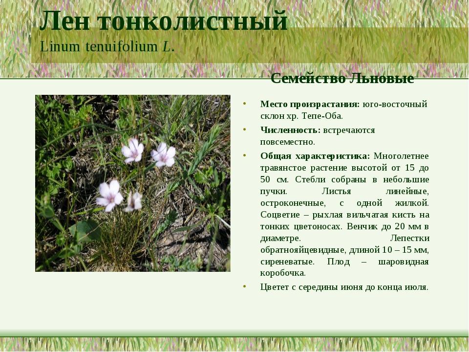 Лен тонколистный Linum tenuifolium L. Семейство Льновые Место произрастания:...