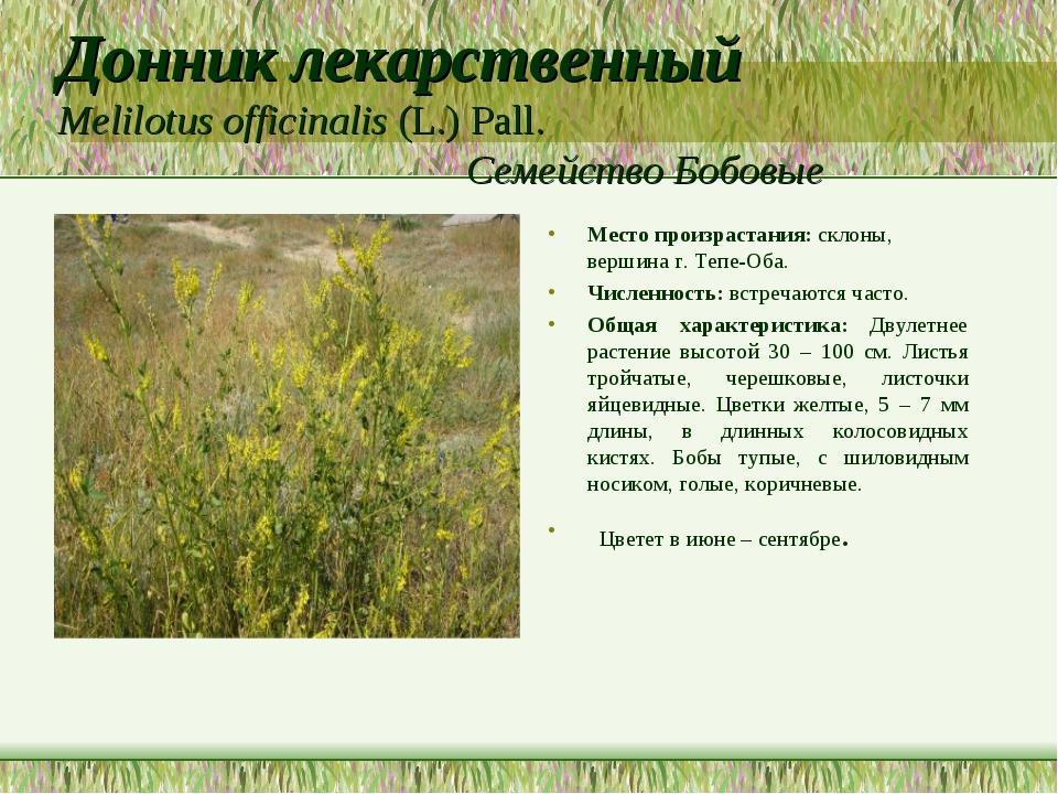 Донник лекарственный Melilotus officinalis (L.) Pall. Семейство Бобовые Место...