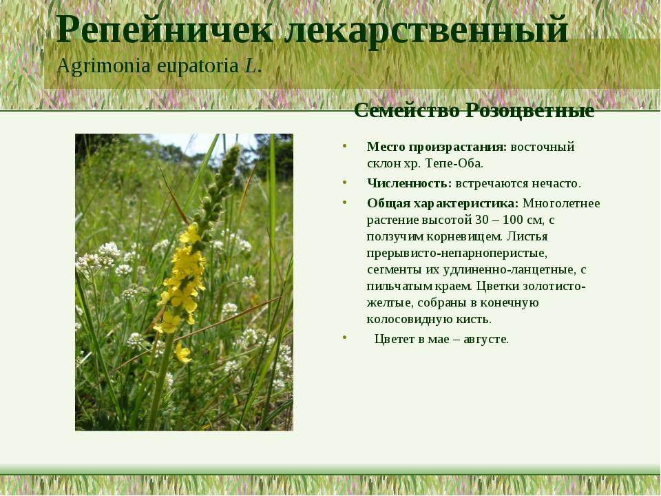 Репейничек лекарственный Agrimonia eupatoria L. Семейство Розоцветные Место п...