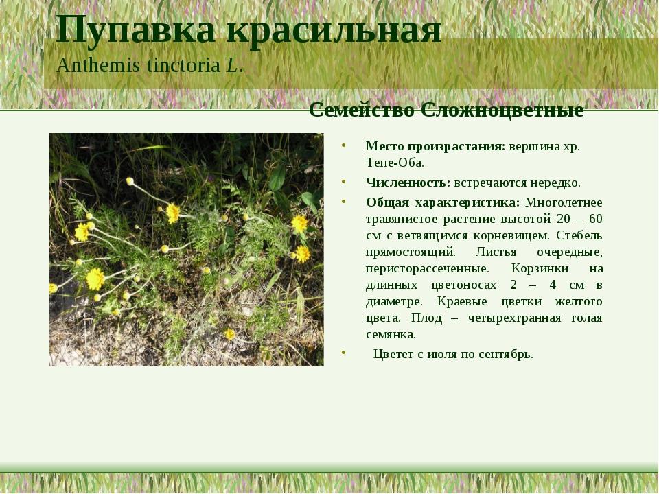 Пупавка красильная Anthemis tinctoria L. Семейство Сложноцветные Место произр...