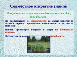 Совместное открытие знаний В экосистеме озера есть живые организмы всех «проф