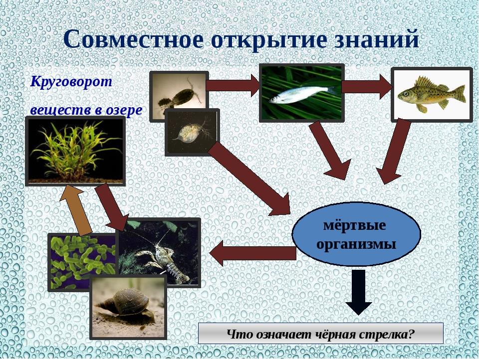 Совместное открытие знаний Круговорот веществ в озере мёртвые организмы Что о...