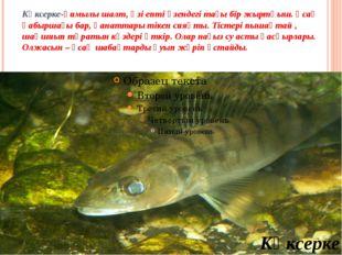 Көксерке-қимылы шалт, өзі епті өзендегі тағы бір жыртқыш. Ұсақ қабыршағы бар