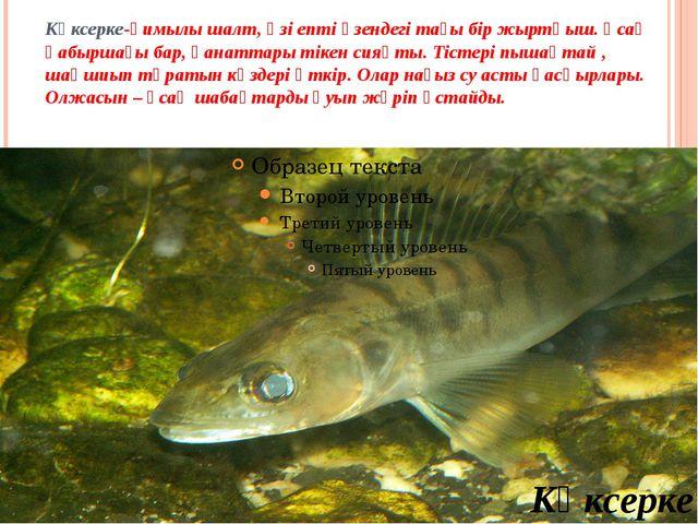 Көксерке-қимылы шалт, өзі епті өзендегі тағы бір жыртқыш. Ұсақ қабыршағы бар...