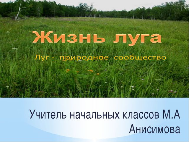 Учитель начальных классов М.А Анисимова