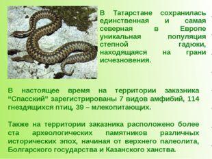 В Татарстане сохранилась единственная и самая северная в Европе уникальная по